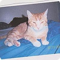 Adopt A Pet :: Jaspur - Norwich, NY