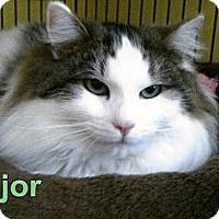 Adopt A Pet :: Major - Medway, MA