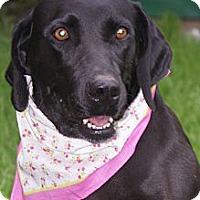 Adopt A Pet :: Brileigh - Hutchinson, KS