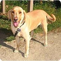 Adopt A Pet :: HUERA - San Diego, CA