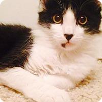 Adopt A Pet :: Minnie - Modesto, CA