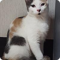 Adopt A Pet :: Winter - Savannah, GA