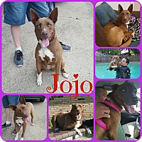 Husky/Shepherd (Unknown Type) Mix Dog for adoption in Ft Worth, Texas - Jojo