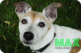 Jack Russell Terrier Mix Dog for adoption in Hamilton, Ontario - Max
