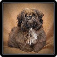 Adopt A Pet :: Baron - Covina, CA