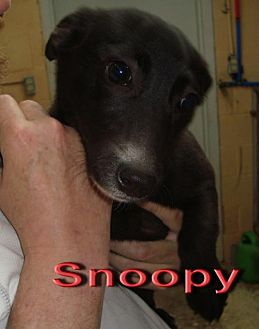 Terrier (Unknown Type, Medium) Mix Dog for adoption in Coleman, Texas - Snoopy