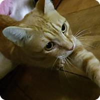 Adopt A Pet :: Ziggy - Witter, AR