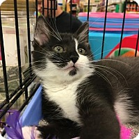 Adopt A Pet :: Marcus - Wilmore, KY