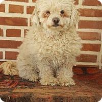 Adopt A Pet :: Aroosak (Doll) - Guelph, ON