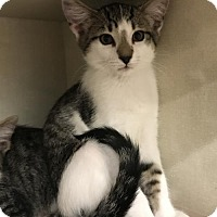 Adopt A Pet :: Homer - Walnut Creek, CA