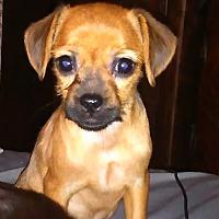 Adopt A Pet :: Guinevere - Fort Scott, KS