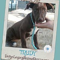 Adopt A Pet :: TRUDY - Lincoln, NE