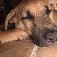 Adopt A Pet :: Tanner - Ormond Beach, FL