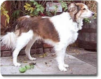 Border Collie Mix Dog for adoption in Stephentown, New York - Quinn