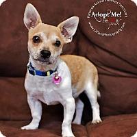 Adopt A Pet :: JACKIE CHAN - Higley, AZ