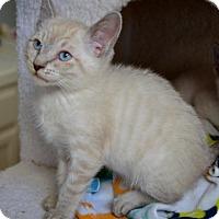 Adopt A Pet :: Patrick D. Prowl - Davis, CA