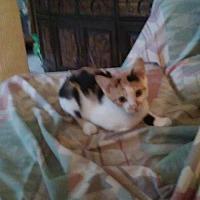 Adopt A Pet :: Dahlia - Montello, WI