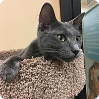 Adopt A Pet :: Fancy - DFW Metroplex, TX