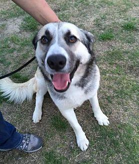 Husky Mix Dog for adoption in Fresno, California - Wyatt