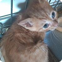 Adopt A Pet :: Tigger - Jefferson, NC
