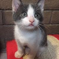 Adopt A Pet :: Peppermint - Phoenix, AZ