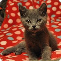 Adopt A Pet :: Puck - Nashville, TN