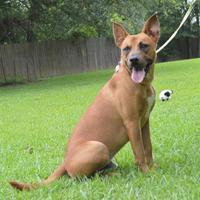 Adopt A Pet :: Lucky - Lafayette, LA