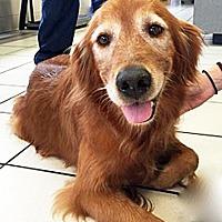 Adopt A Pet :: Lucy III - BIRMINGHAM, AL