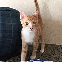 Adopt A Pet :: Sherbert - Elk Grove, CA