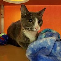 Adopt A Pet :: Jolie - Elyria, OH