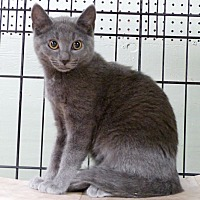 Adopt A Pet :: Star - Marlinton, WV