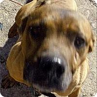 Adopt A Pet :: Yogi - Moulton, AL