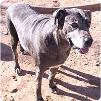 Adopt A Pet :: Tucker - Gilbert, AZ