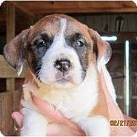 Adopt A Pet :: Simone - Westbrook, CT