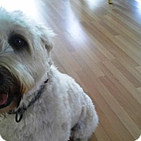 Adopt A Pet :: Daisy - kennebunkport, ME
