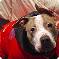 Adopt A Pet :: Nessa - Reisterstown, MD