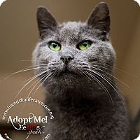 Adopt A Pet :: Carly Sue - Frederick, MD
