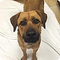 Adopt A Pet :: Zelda - Mission Viejo, CA