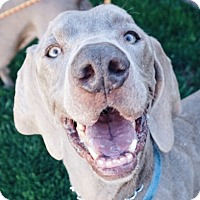 Adopt A Pet :: EJ & Numi - Sun Valley, CA