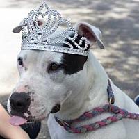 Adopt A Pet :: Rumba - Davie, FL