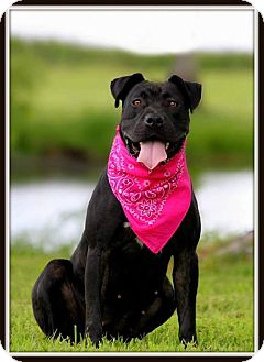 Pit Bull Terrier Mix Dog for adoption in Madionsville, Kentucky - Dalyla