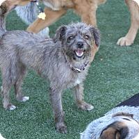 Adopt A Pet :: Masey - Rockwall, TX