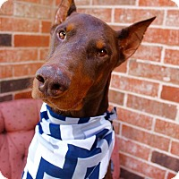 Adopt A Pet :: Collin - Fort Worth, TX