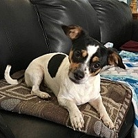 Adopt A Pet :: Gus - Mesa, AZ