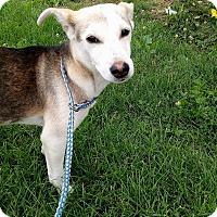 Adopt A Pet :: Cricket ~ meet me! - Glastonbury, CT