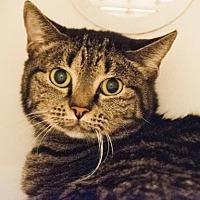 Adopt A Pet :: Bitsy - Alpharetta, GA