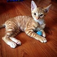 Adopt A Pet :: Beck - Carencro, LA