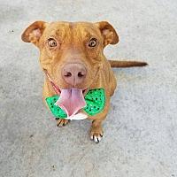 Adopt A Pet :: Ralph - Umatilla, FL