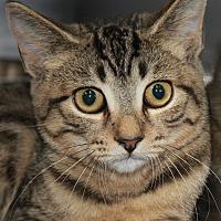 Adopt A Pet :: DAHLIA - Clayton, NJ