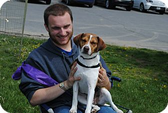 Beagle Mix Dog for adoption in Freeport, Maine - Robbie